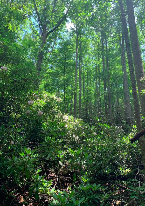 Appalachian State University Nature preserve