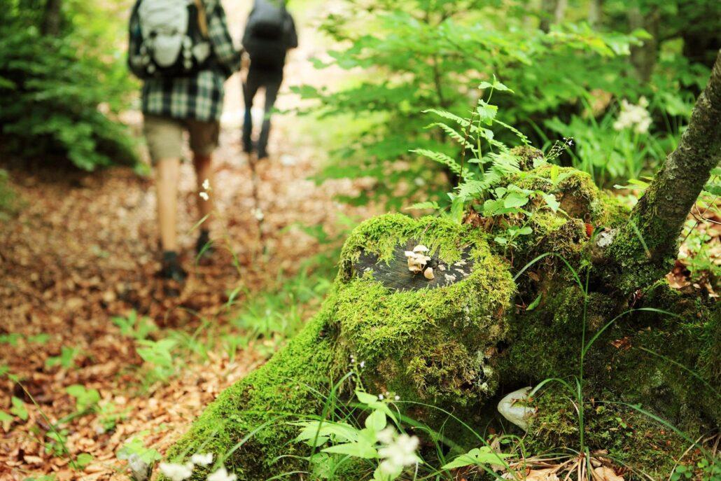 Hike Boone NC